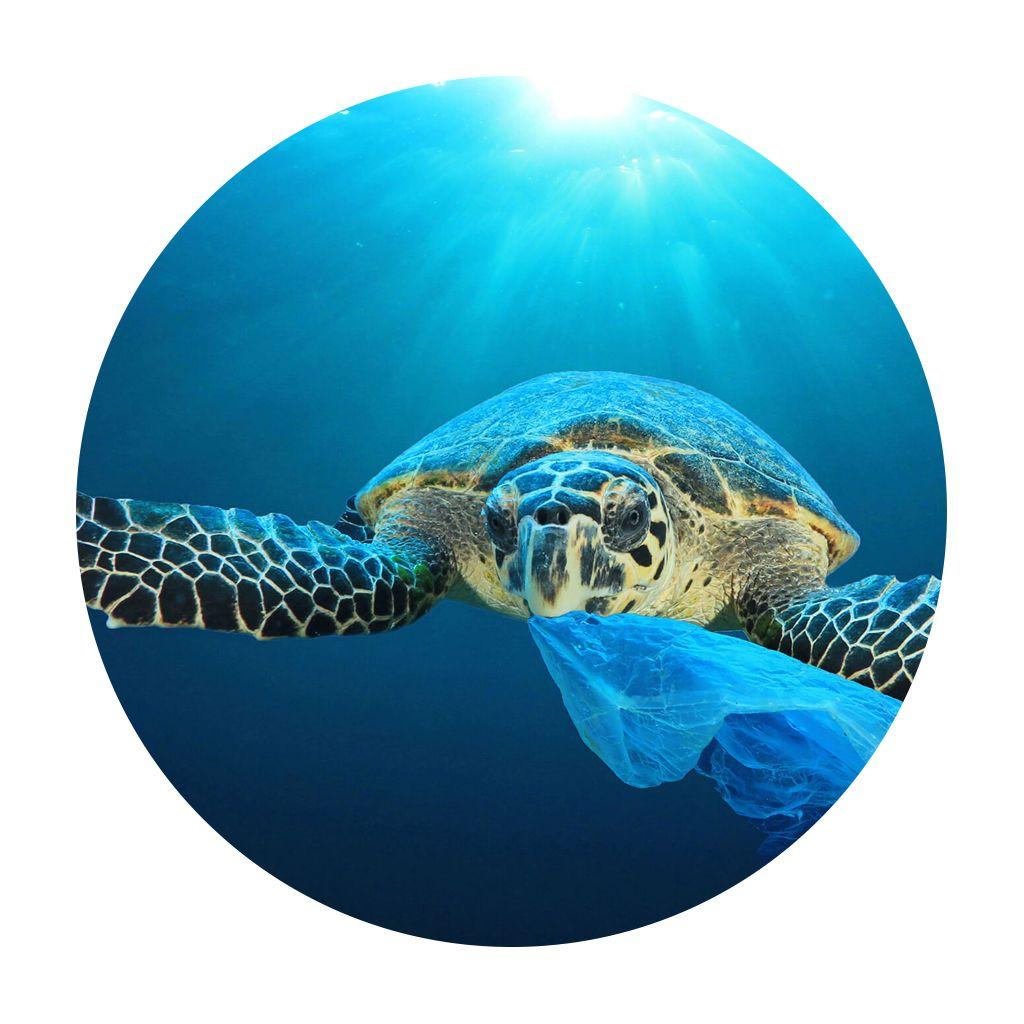 ensemble pour l%E2%80%99ecologie - Gobelets écoresponsables : une alternative écologique